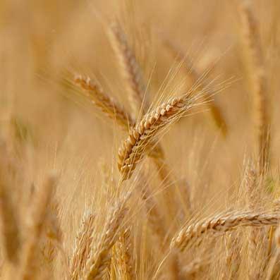 Crop Type