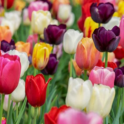 Ornementals Flowers